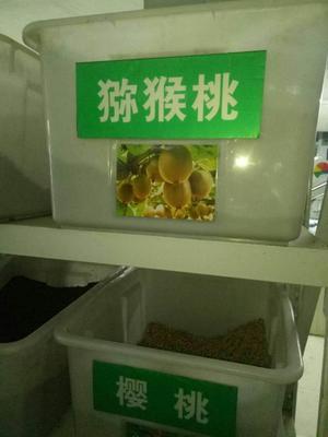 江苏南京江宁区猕猴桃种子