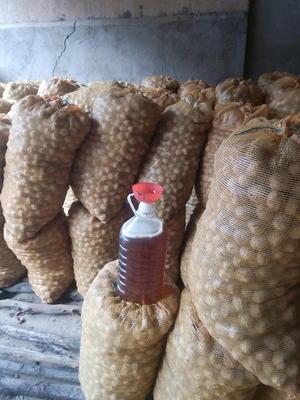 陕西省渭南市临渭区橄榄油