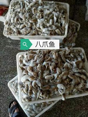 广西壮族自治区北海市海城区八爪鱼