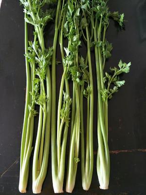 山东省济南市章丘市章丘鲍芹 60cm以上 大棚种植 1.0~1.5斤