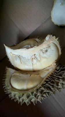 广西崇左凭祥市金枕头榴莲 80 - 90%以上 2 - 3公斤