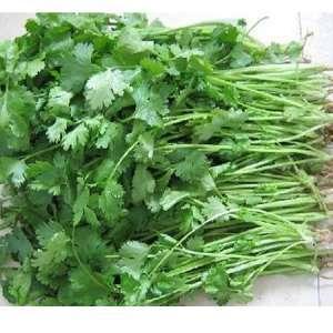 江苏省南京市江宁区香菜种子