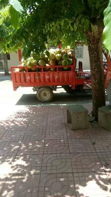 海南万宁万宁市椰青 3 - 4斤