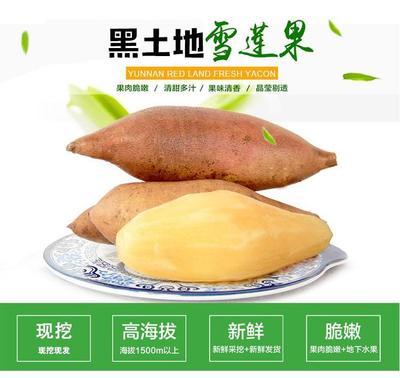 湖南湘西龙山县圣诞元旦雪莲果狂欢购 4两以上