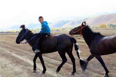 新疆博尔塔拉博乐市伊犁马 400-600斤