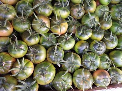 辽宁省大连市庄河市草莓柿子 2 - 3两以上