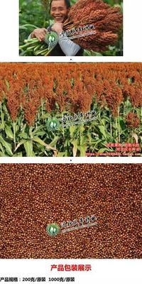 陕西榆林横山县红高粱 霉变 >3% 1等品