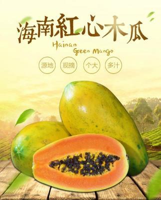海南海口琼山区红心木瓜 1 - 1.5斤