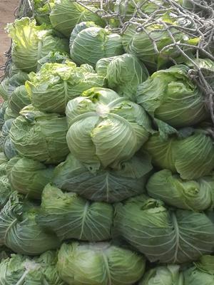 四川省德阳市广汉市卷心包菜 2.5~3.0斤