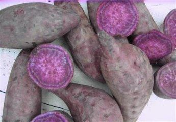 山东枣庄峄城区紫罗兰紫薯 3两以上