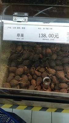 云南红河金平苗族瑶族傣族自治县草果