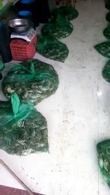 江苏宿迁泗阳县洪泽湖河蟹 2.0两以下 母蟹
