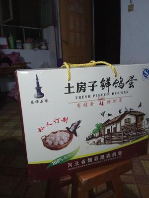 河北邯郸魏县肉鸽蛋 食用 礼盒装