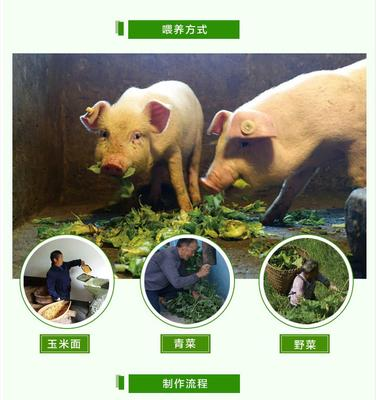 四川省泸州市古蔺县猪油