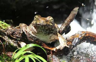 广东广州黄埔区石蛙
