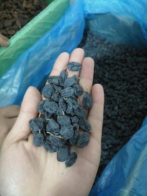 新疆喀什喀什市黑加仑葡萄干 一等