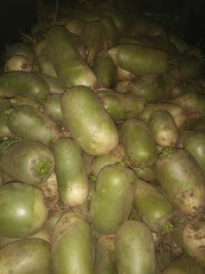 河南省南阳市邓州市青皮萝卜 1~1.5斤
