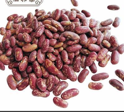 黑龙江省大兴安岭地区大兴安岭地区加格达奇区紫花芸豆