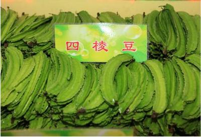 河北衡水冀州市长寿翼豆 6cm以上