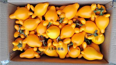 广东茂名信宜市乳茄黄金果五指茄 2两以上