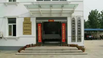 江苏扬州高邮市蛋鸭苗