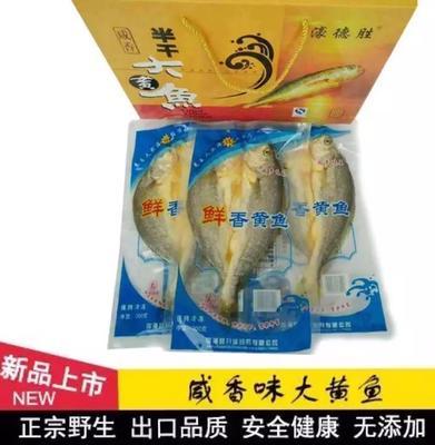 福建宁德霞浦县大黄鱼 人工殖养 0.5公斤以下