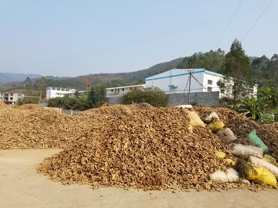 广西百色西林县低硫干姜片 袋装 18-24个月