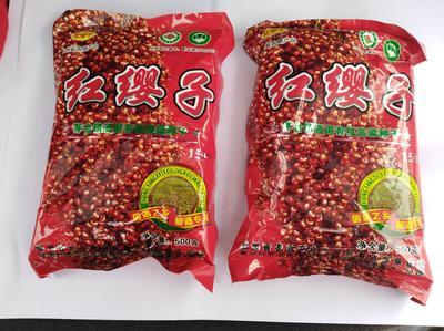 贵州省遵义市习水县红樱子高粱种子 种子