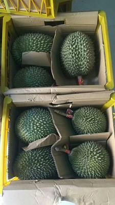 广西崇左凭祥市猫山王榴莲 90%以上 2 - 3公斤