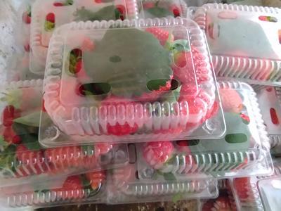 内蒙古自治区乌兰察布市卓资县奶油草莓 30克以上