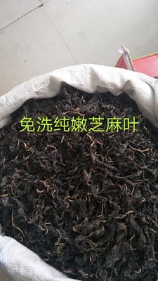 河南郑州惠济区干芝麻叶 24个月以上