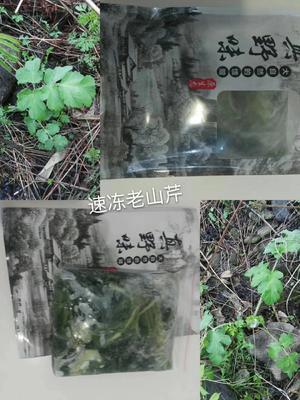 黑龙江省牡丹江市绥芬河市山芹 40cm以下 露天种植 0.5斤以下