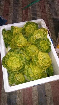 湖北孝感汉川市超级黄心菜