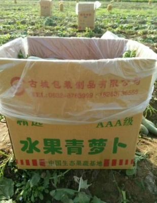 山东省枣庄市滕州市青皮萝卜 1~1.5斤