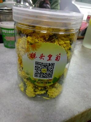 广东深圳龙岗区金丝皇菊 罐装 1-2年 一级
