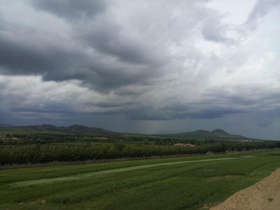 内蒙古赤峰松山区鞑靼荞麦