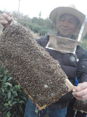 江苏苏州太仓市土蜂