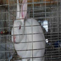 陕西渭南蒲城县兔肉类 2-3个月 新鲜