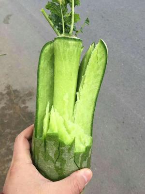 河北省唐山市曹妃甸区水果萝卜 1~1.5斤