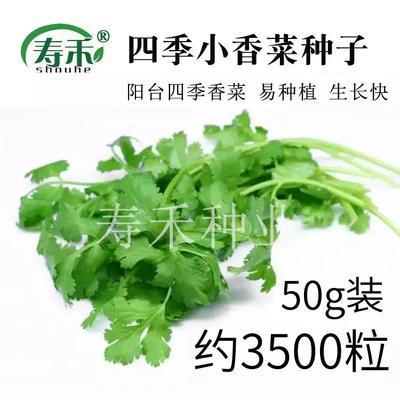 山东潍坊寿光市香菜种子