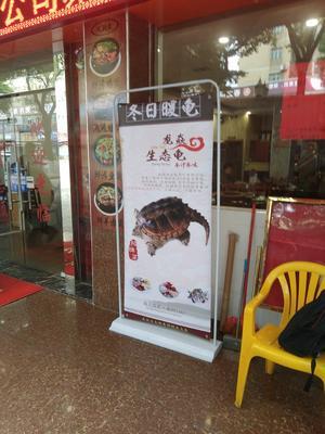 广东深圳宝安区鳄龟 30-50cm 4-6斤