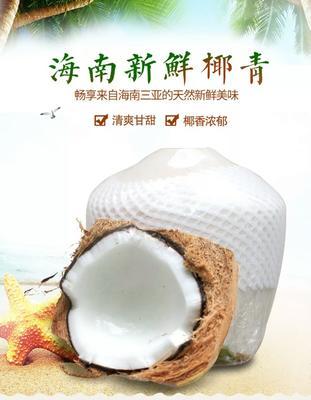 海南海口琼山区椰青 3 - 4斤