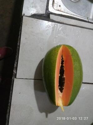 广西南宁西乡塘区红心木瓜 1.5 - 2斤
