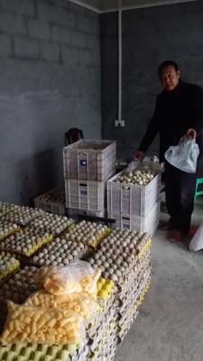 重庆酉阳麻鸭蛋 食用 散装