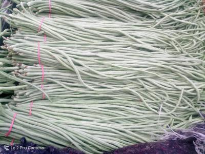 天津武清长豇豆 40cm以上 打冷