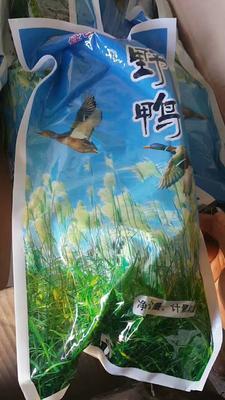 吉林省白城市大安市绿头鸭 2斤以下