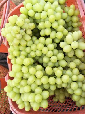 新疆吐鲁番吐鲁番市红葡萄干 一等