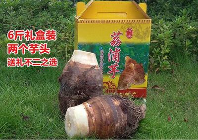 广西桂林荔浦县荔浦芋头 6cm以上