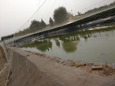 北京丰台台湾泥鳅 15cm以上 人工养殖