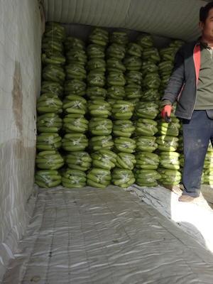 山东德州平原县绿皮西葫芦 0.4~0.6斤